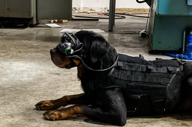 Army researchers have developed augmented reality goggles that would allow handlers to give commands to military working dogs while staying out of harm's way. Photo courtesy of Command Sight