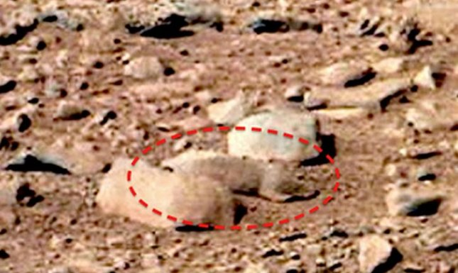 Mars rat discovered by UFO enthusiast Scott C Waring is just a rock. The panoramic image was taken by NASA's Mars rover Curiosity in September at the Rocknest site.