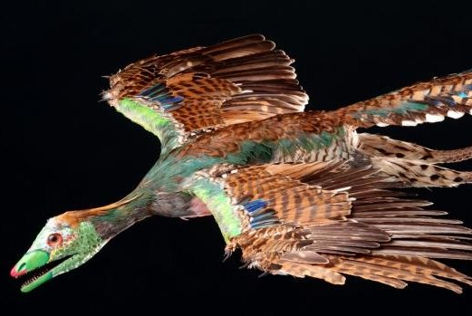 An artist's reconstruction of Archaeopteryx. (R. Liebreich/Bavarian State Collection for Paleontology and Geology)