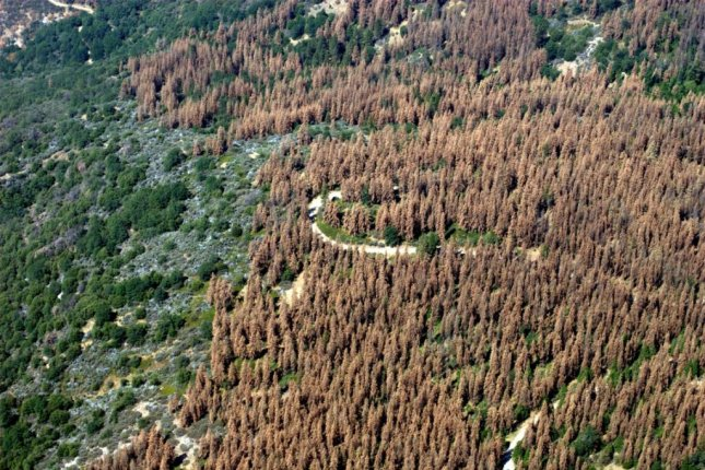 An aerial photo shows widespread tree loss in Central California's Sierra Nevada Mountains. Photo by U.S. Forest Service