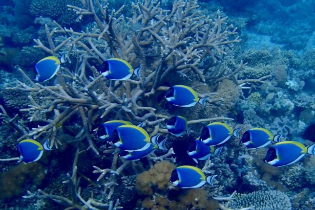 Researchers discovered a series of refuges for threatened coral species off the coast of northern Mozambique. Photo by Tim McClanahan/WCS