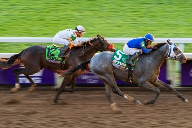 Essential Quality, owned by Dubai's Sheik Mohammed, wins the Breeders' Cup Juvenile at Keeneland in Lexington, Ky., on Friday and becomes the very early Kentucky Derby favorite. Photo by Scott Serio, Eclipse Sportswire, courtesy of Breeders' Cup