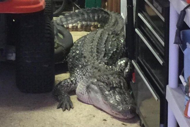 An alligator surprised a Texas man who went into his garage in preparation for some yard work. Screenshot: KPRC-TV