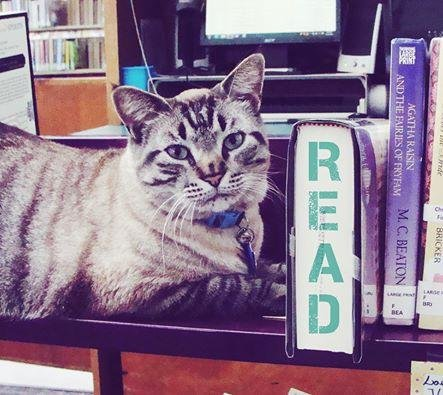 The White Settlement City Council in Texas voted to boot Browser the cat from the city's public library after nearly six years. Photo by Browser White/Facebook
