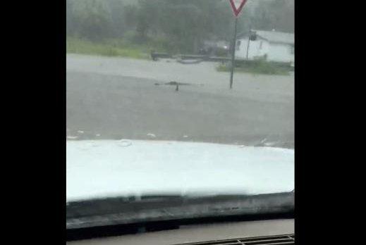 An alligator swims on a flooded Bradenton, Fla., street. Screenshot: Iris Edibles/Facebook