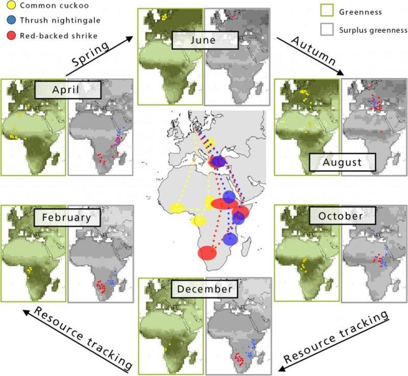 The paths of migratory birds across Africa follow seasonal vegetation peaks. Photo by Kasper Thorup, et al./Science Advances