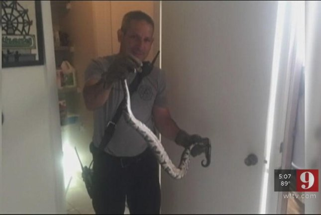 Orange County Fire Rescue responders captured a 4-foot ball python an Orlando man found coiled on the floor of his pantry. Screenshot: WFTV