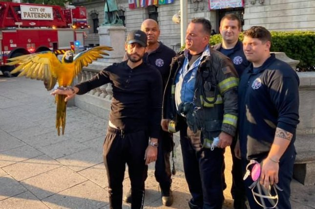 Firefighters in Paterson, N.J., came to the rescue of a macaw that flew away from its owner and became stranded on the roof of Paterson City Hall. Photo courtesy of the Paterson Fire Department