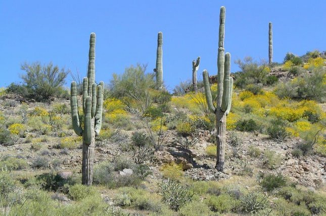 Plants in arid and semi-arid climates use a different form of photosynthesis than plants and crops in temperate environs, and new research suggests it could help temperate crops survive droughts. Photo by Pxfuel/CC