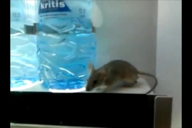 A video shows a mouse in a bottled water vending machine purported to be in a Cyprus hospital. Screenshot: Newsflare