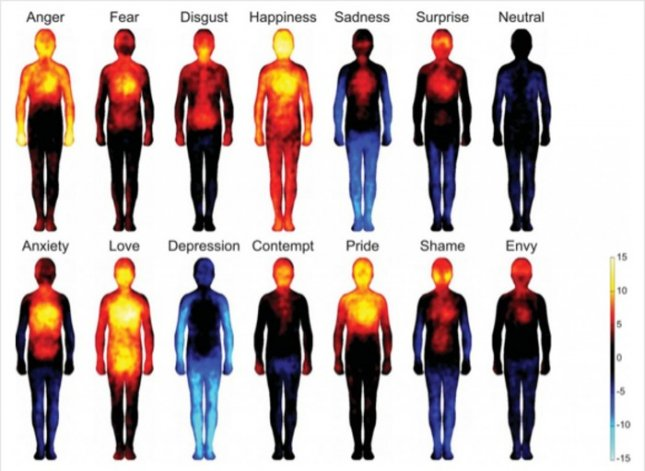 Yellow shows regions of increased sensation while blue areas represent decreased feeling in these composite images. Image courtesy of Lauri Nummenmaa, Enrico Glerean, Riitta Hari, and Jari Hietanen.