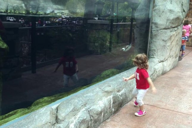 Hala the penguin plays with a toddler named Brynn at Ripley's Aquarium of the Smokies in Tennessee. Jukin Media video screenshot
