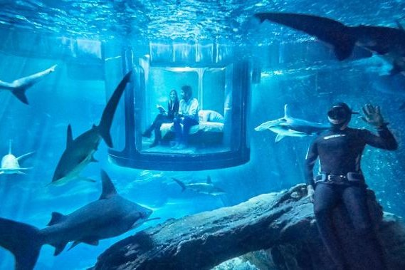 Airbnb is offering users the chance to win a night in a room submerged in a  Paris shark tank  Photo courtesy of Airbnb. Watch  Airbnb room submerged in Shark Aquarium tank   UPI com