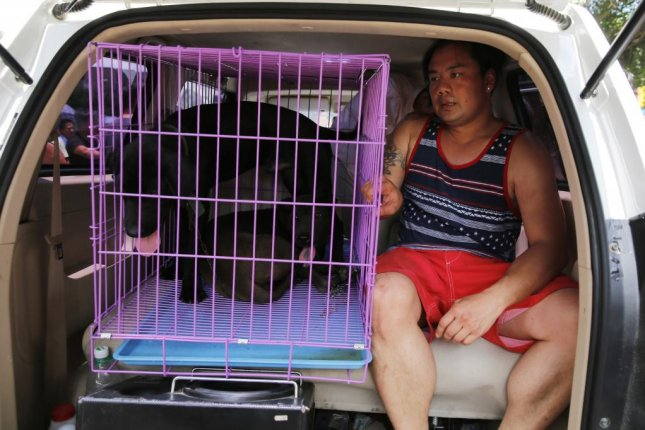 An animal activist sits inside a van with dogs he bought at a market in Yulin city in southern China's Guangxi province in June 2016. Photo by Wu Hong/EPA