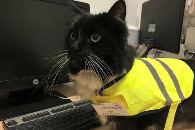 Felix the cat was promoted to Senior Pest Controller at the Huddersfield train station in England. Photo by Felix the Huddersfield Station Cat/Facebook