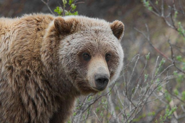 Famous Scottish climber survives grizzly bear attack in Canada