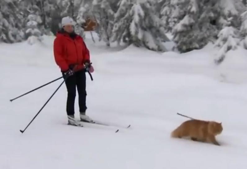 Adventurous Norwegian cat tows skier on mountain