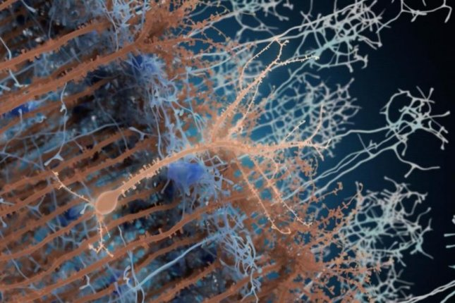 New adult-born neuron, in light brown, is seen connecting with synaptic partner neurons, in light blue, and pre-existing neurons, in dark brown. Photo by Institut Pasteur/PM Lledo