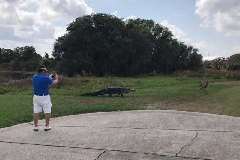 An alligator chases two sandhill cranes at the ChampionsGate Golf Club near Orlando, Fla. Screenshot: Bill Pruitt/Facebook