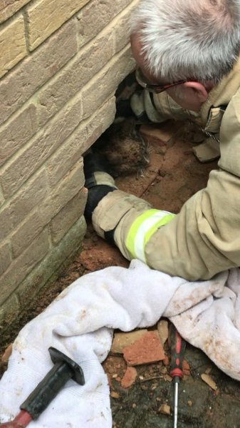 Animal rescuers and firefighters responded to a home in England where a cat became stuck between two walls. Photo courtesy of the RSPCA