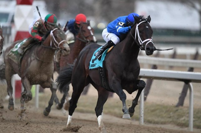 Enticed strides out to victory in Saturday's Gotham Stakes at Aqueduct, furthering his Kentucky Derby credentials. Photo courtesy of Robert Mauhar/NYRA