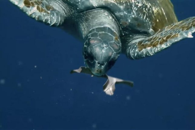 A turtle enjoys a meal of edible six-pack rings from Saltwater Brewery. Screenshot: We Believers/YouTube