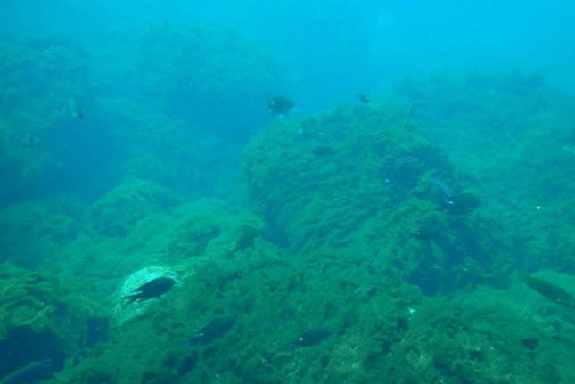 Researchers found rising CO2 levels near volcanic seeps resulted in the proliferation of coral-choking weeds and algae. Photo by Marco Milazzo