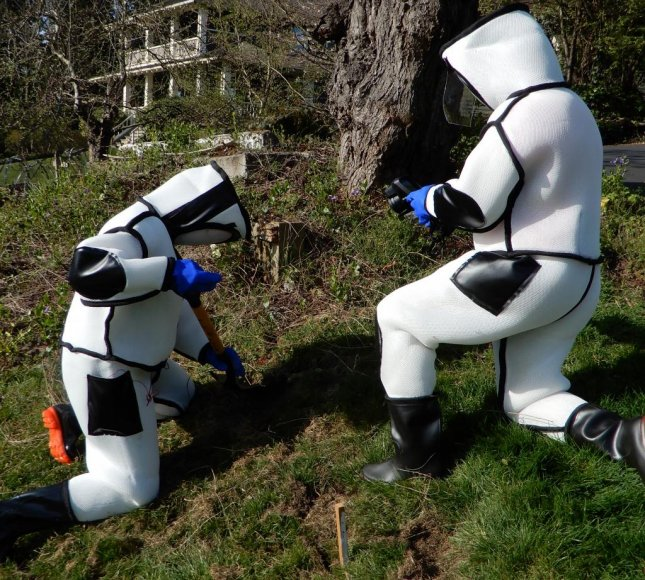 State agricultural pest eradicators wear protective suits while searching for underground nests of invasive Asian giant hornets. Photo courtesy of the Washington State Department of Agriculture