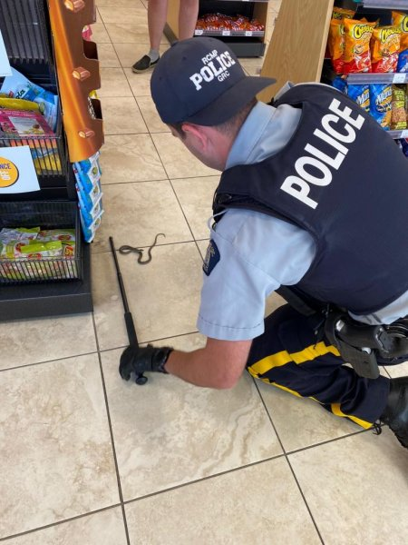 RCMP Alberta said officers in Cochrane were summoned to a local gas station to remove a python that turned out to be a tiny garter snake. Photo courtesy of RCMP Alberta