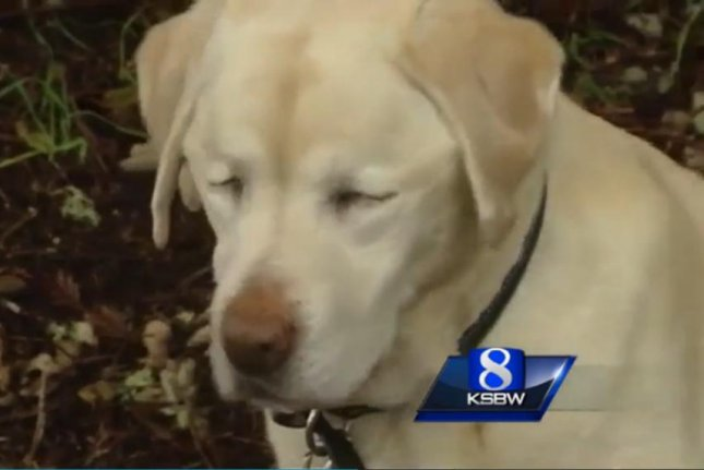 Sage the blind yellow lab is back home after getting lost in the woods for a week. Screenshot: KSBW-TV