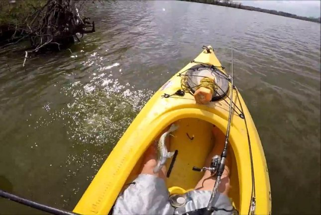 A fish jumps back into a man's kayak right after being released. Screenshot: JukinMedia