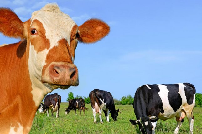 cattle virus linked to breast cancer