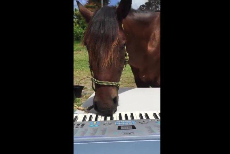 Murphy the horse rocks out on keyboard. Screenshot: JukinMedia