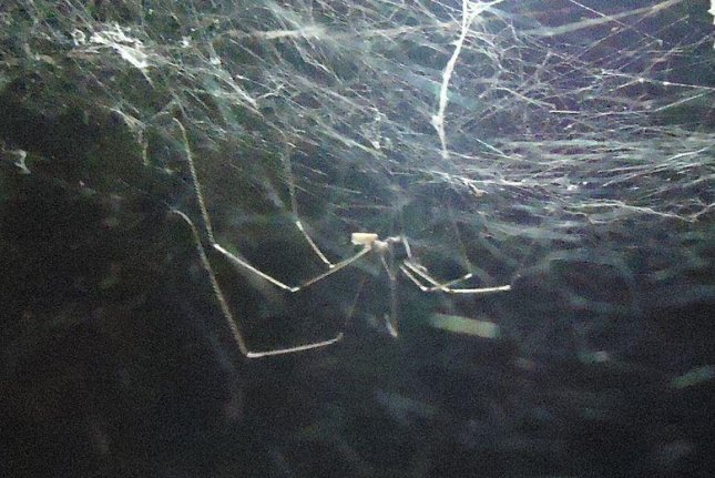 Carbon nanotube-coated spiders spin super strong silk