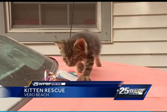 Monte the cat walks across the hood of the Monte Carlo that had to be destroyed with a chainsaw to free the feline from the dashboard. Screenshot: WPBF-TV
