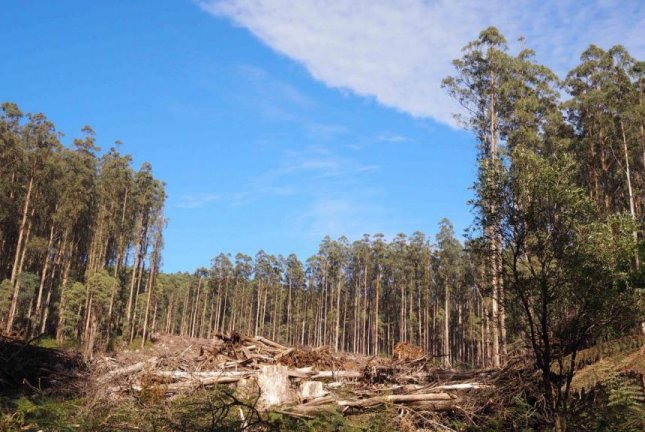 The effects of logging and wildfire on forest soil health can be measured decades later, according to researchers in Australia. Photo by Tabitha Boyer/ANU