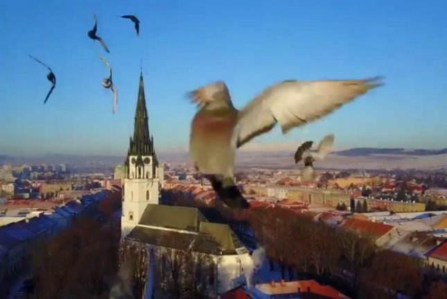 Pigeon knocks camera drone out of the sky