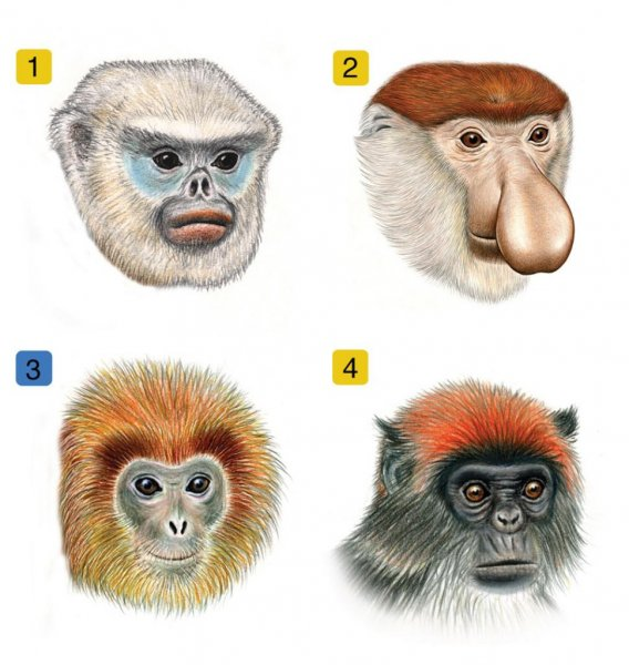 The scientists found that species that lived in the same habitat with other closely related species tended to have more complex facial patterns, suggesting that complex faces aided in species recognition. (Credit: UCLA)