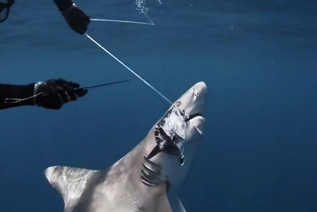 A Florida boater works to cut a sandbar shark free from a line after being unable to remove the hook from the ocean predator's mouth. Screenshot: JukinMedia