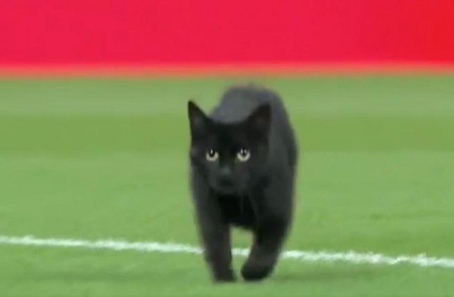 A black cat was seen running onto the field before an English Premier League soccer match between Manchester United and Liverpool. Screen capture/Manchester United/Twitter