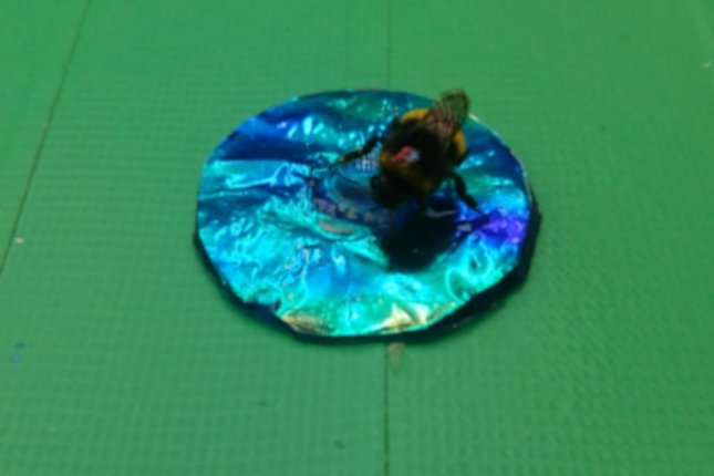 A bumblebee appears befuddled by an iridescent circle. Photo by Karin Kjernsmo/University of Bristol