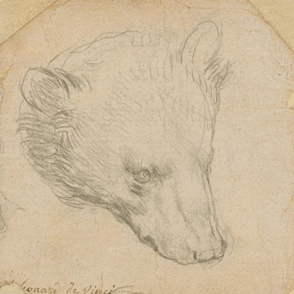 Head of Bear is one of a number of drawings Leonardo da Vinci completed using the silverpoint technique. File Photo courtesy of Christie's
