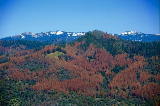 To deal with high temperatures between 2012 and 2015, trees in the Sierra Nevada drew lots of water from the soil -- more water than rain or snow could replenish. Photo by USDA/Forest Service