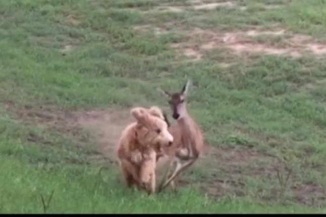 Maybe this dog will think twice next time before he tells Bambi a your mama joke. Screenshot: Newsflare