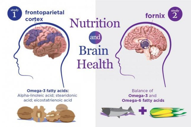 New studies link specific nutrients to the structure and function of brain regions that are particularly sensitive to aging and neurodegenerative disease. Photo illustration by Julie McMahon