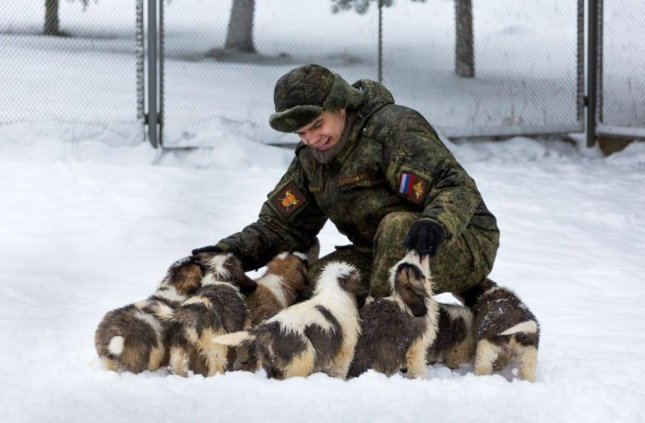 Cool Soldier Army Adorable Dog - Russian-military-releases-cute-puppy-video-for-New-Years  You Should Have_487496  .jpg