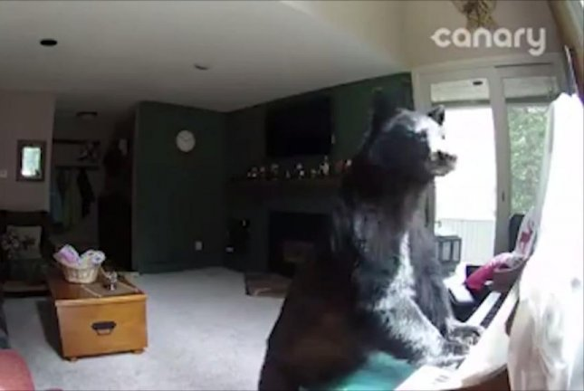 Ludwig von Bear-thoven. Beargang Amadeus Mozart. Beary Lee Lewis. Li-bear-ace. Whatever his name is, this bear was caught on a Colorado resident's security camera playing the piano after breaking in to steal food. Screenshot: Fox 5 DC/Facebook