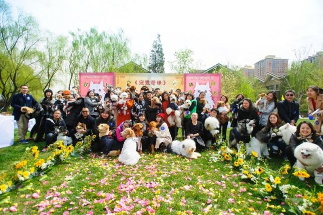 The 21 dogs and their owners from the collective pet wedding in Beijing. Photo courtesy of Smack Talk