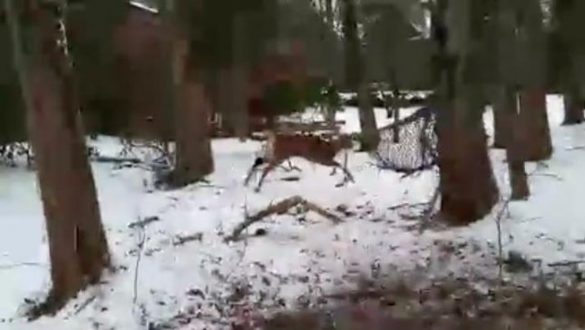 A pair of Waltham Animal Control officers rescued a buck that had become trapped in the netting of a backyard hammock. Photo courtesy of Waltham Animal Control