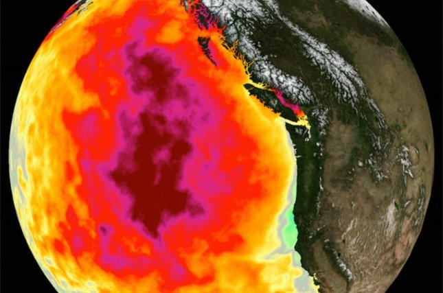 The extreme marine heatwave known as The Blob lasted more than 350 days and expanded across much of the North Pacific Ocean. It was the biggest, longest marine heatwave in decades. Photo byNASA Physical Oceanography Distributed Active Archive Center